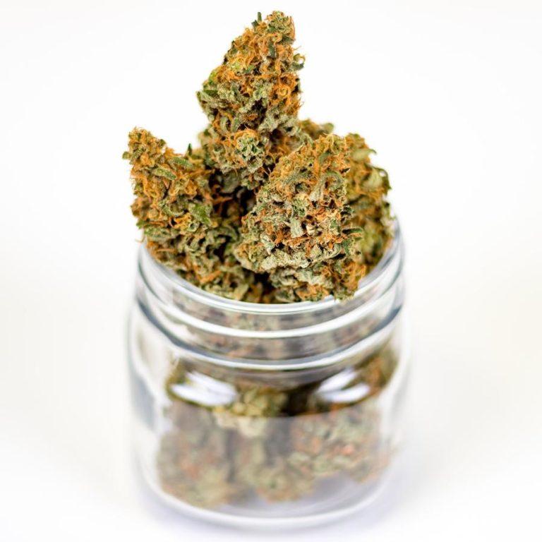 Wybieranie odmian marihuany