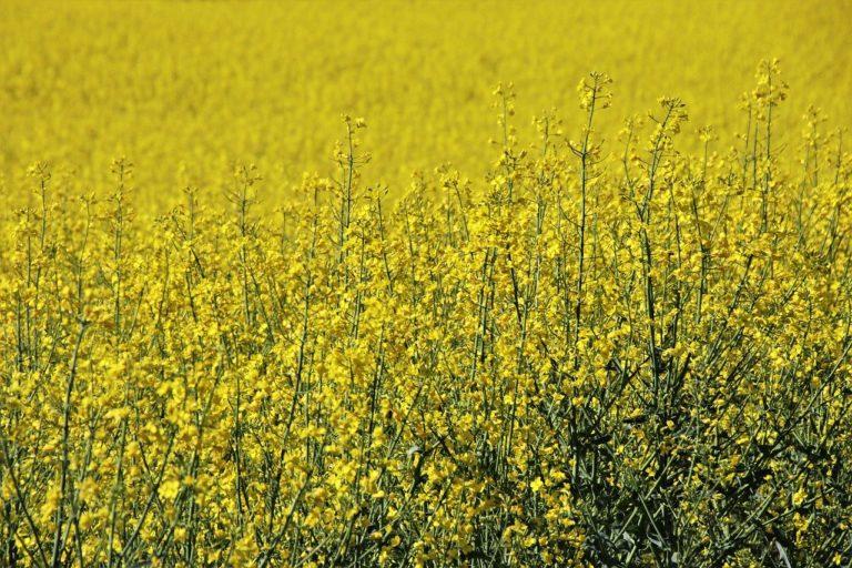 W jaki sposób realizować skuteczną ochronę zbóż?